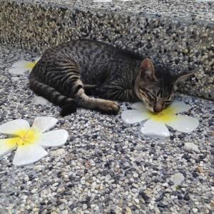 Коты пи пидона