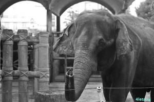 Zoo_saigon
