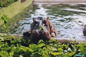 Zoo_saigon_zoopark_2
