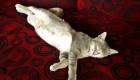 кот спит таиланд
